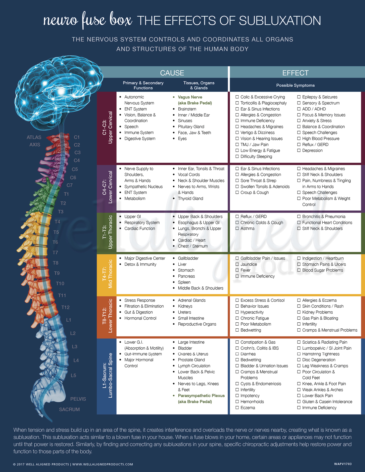 Neuro Fuse Handouts Well Aligned Products Major Box