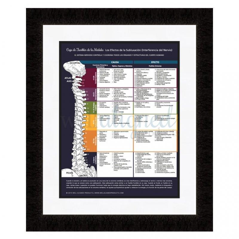 chiropractic meric chart spanish